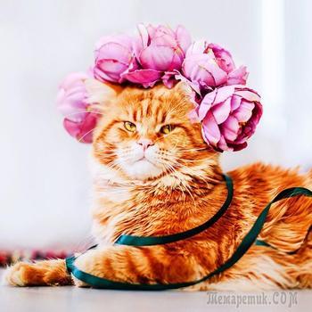Котлета — шикарный рыжий кот, в которого невозможно не влюбиться