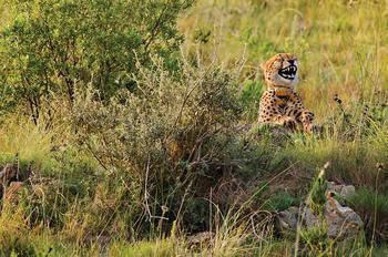 20 финалистов конкурса самых смешных фотографий дикой природы