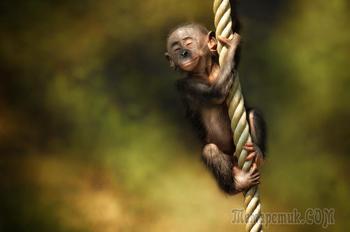 Драгоценности жизни - 36 фото детёнышей животных