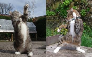 Эти «танцующие» кошки выглядят так, как будто они реально пришли тусоваться в клуб