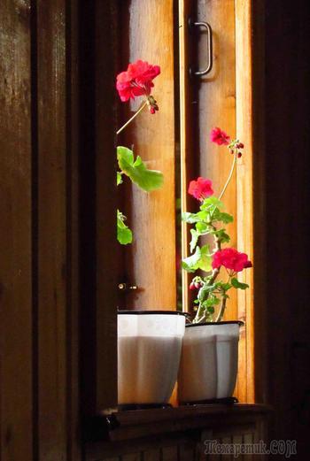 Цветы в учреждениях (Стих)