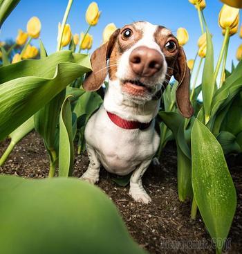 Веселые фото собак Кейли Грир