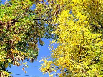 Осень в Сaмаре.