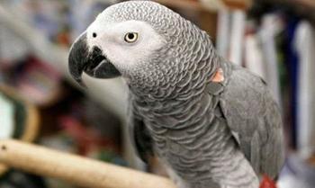 Невероятные истории о воссоединении скорбящих хозяев с домашними животными