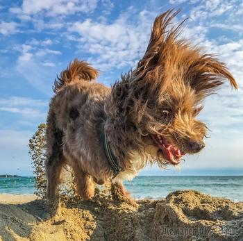 Финалисты фотоконкурса Comedy Pet Photography Awards
