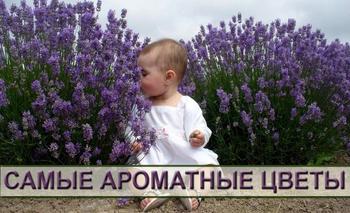 Самые ароматные цветы для вашего сада