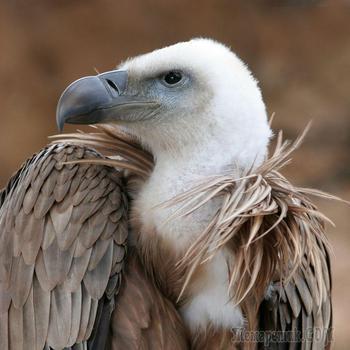 Красивые фотографии птиц от профессиональных фотографов