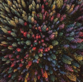 20+ доказательств того, что осень — самый искусный художник на свете