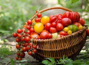 Выращивание томатов по Лунному календарю в 2021 году