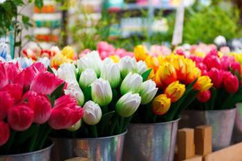 Проделаем жизнь букету из тюльпанов: 5 хитростей, которые работают