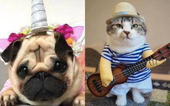 15 забавных костюмов домашних любимцев