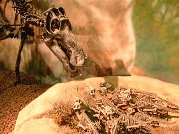 Распространенные заблуждения о динозаврах