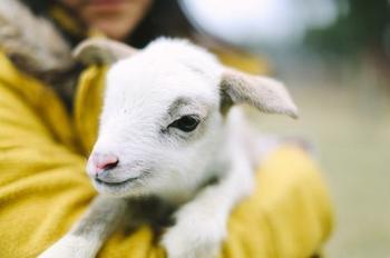 20 мимишных малышей животных, которые согреют душу в этот холодный денек