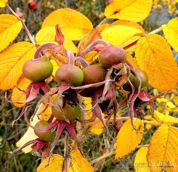 Ягоды, цветочки