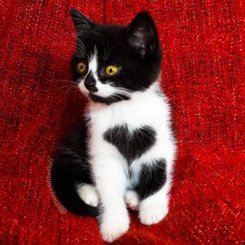 Познакомьтесь с Зоэ! Кошка, которая буквально носит сердце на груди