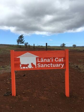 Lanai Cat Sanctuary - настоящий рай для кошек