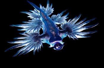 Увлекательное досье на голубого дьявола