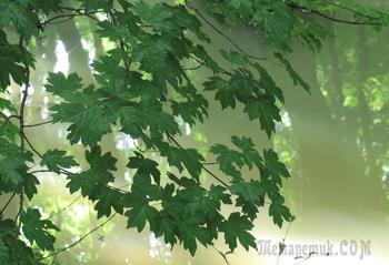 У лесного ручья (Стих)