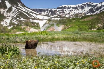 Уникальные фотографии дикой природы