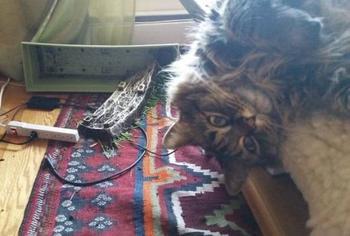 31 случай когда домашние животные проказничают