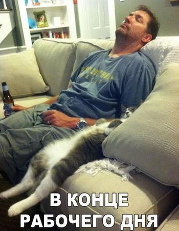 Забавные истории и анекдоты о котах. Вторая часть