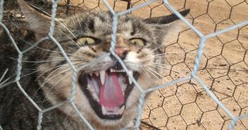 Зачем австралийцам «великая стена» против кошек