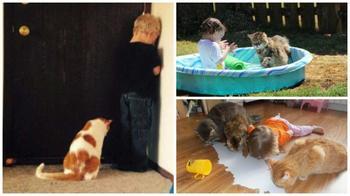 Почему каждому ребёнку нужен кот