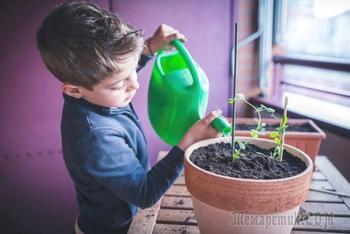 Полезные растения для детской комнаты