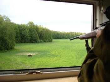 Как охотиться на кабана с вышки?