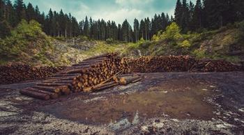Глава Минприроды Кобылкин не поддержал введение запрета на экспорт леса в Китай