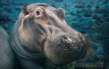 Красивые портреты исчезающих животных