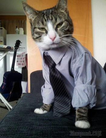 Кошки, которые знают, как быть победителем по жизни