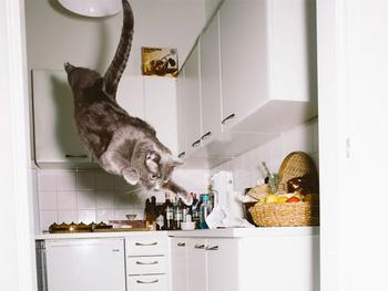 Австрийский фотограф снимает летающих котов