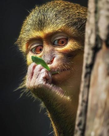 Ещё 11 умопомрачительных фактов о животных, которые вы точно не знали