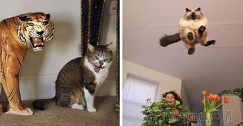 23 клевых котика, которых сфотографировали в ТОТ САМЫЙ момент