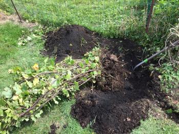 Как правильно пересадить плодовый кустарник на новое место?