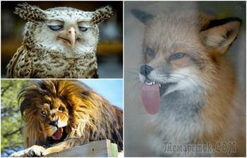 18 забавных животных, глядя на неподдельные эмоциии которых невозможно не улыбнуться