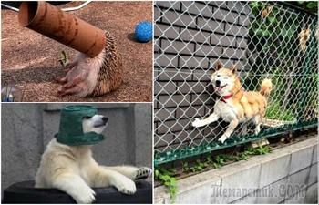 18 забавных животных, которые неожиданно оказались в весьма неловких ситуациях