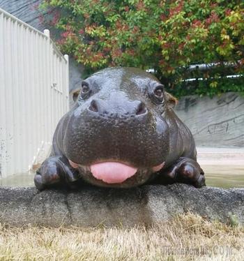 Животные, которым достаточно показать язык, чтобы вы поплыли от умиления