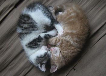 20 котов, которые готовы отпраздновать День влюбленных когда угодно