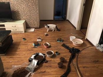 Спасатели взламывают двери квартир, чтобы спасти животных, оставшихся без хозяев из-за вспышки коронавируса
