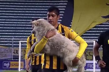 Во время футбольного матча бездомная собака выбежала на поле...