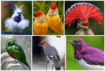 Птички невероятной красоты