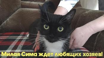 Молодая, энергичная кошка очень хочет стать домашней. Ищем дом.
