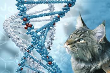 Удивительные факты о людях и животных о которых мы узнали благодаря генетическим исследованиям