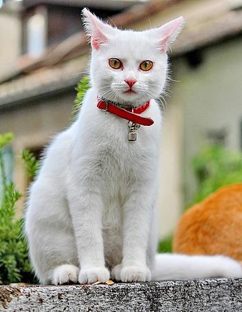 Что сулит хозяину окрас его кошки