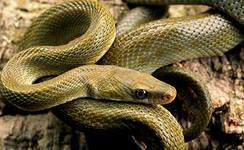 змея переползла дорогу