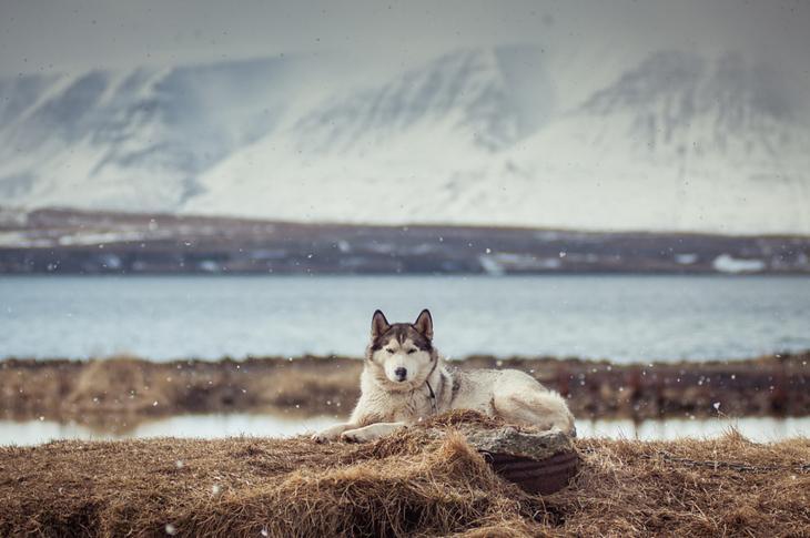 Фотографии собак - 16