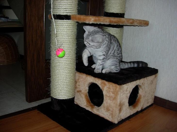 Оригинальные домики для кошки своими руками - выбор конструкции, идеи
