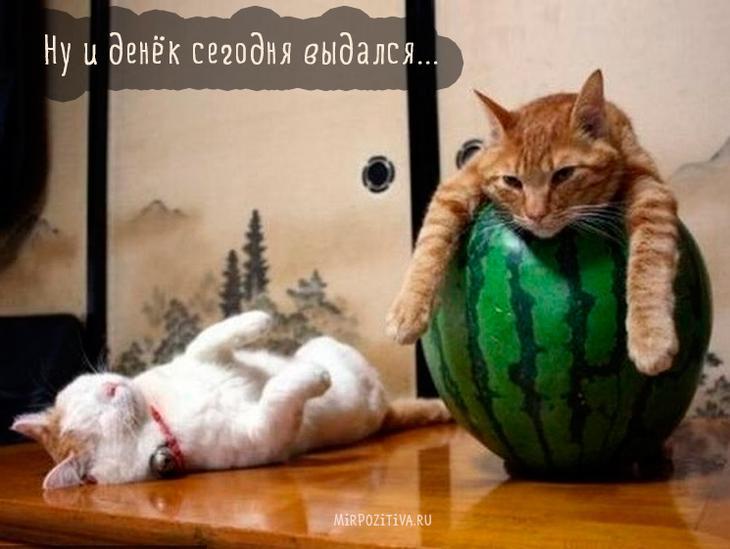 кошка в арбузе